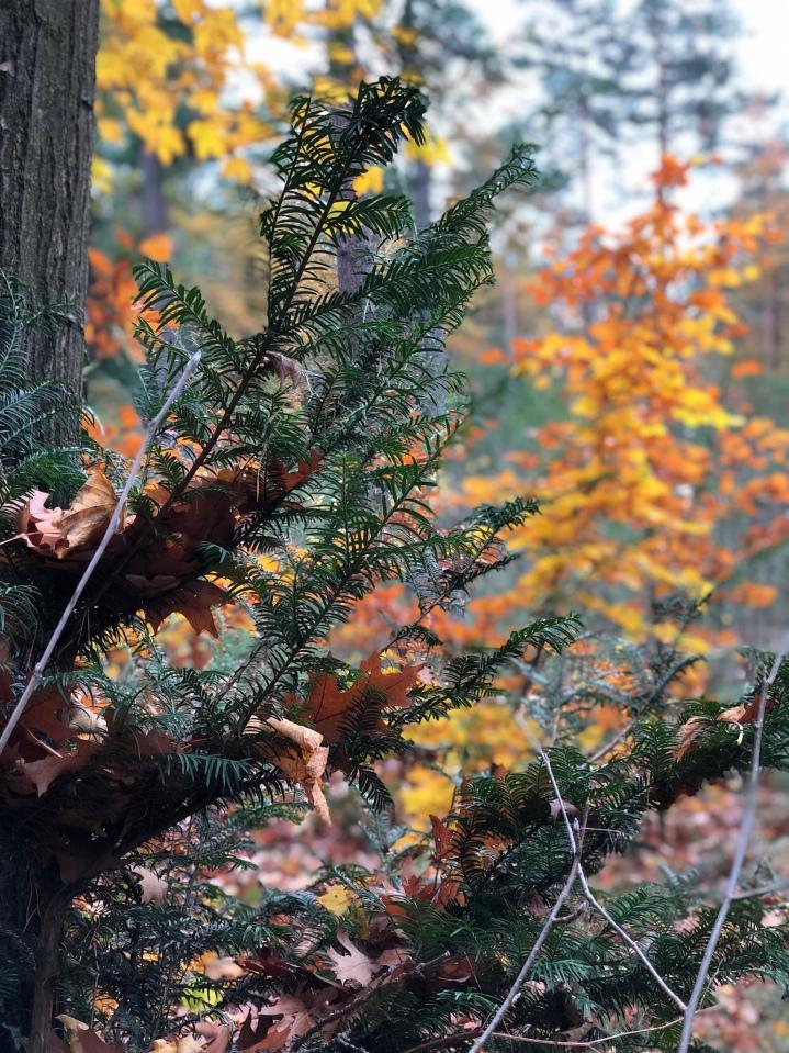 {Leben mit Kind} Wochenende in Bildern 9.11. – 11.11.2018 Laternenleuchten, Waldwärts,Spielen